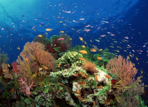 厦门往返长滩岛6天5晚半自助游(出海环岛游 珊瑚花园潜浮 海鲜bbq 含