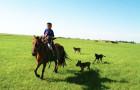 皇家马场马术学习亲子非凡体验 与马儿相伴2日游(夜宿蒙古大营 峡谷探险)