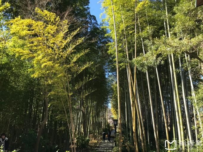 一早推开窗,看到天气晴朗。赶紧来到酒店餐厅,远远望去,富士山的美景一览无余。终于看到了富士山的真面目。只见白雪覆盖着山体的大部分,配合上这蓝天,景色还是非常棒的。看过富士山,一行人驱车前往了修缮寺,据说这是一休法师修建的寺庙。寺庙不大,但是依山而建还是很精致的一处庙宇。伊豆地区也算是日本的农村了,沿着小路我们一路慢慢地欣赏着,这个美丽的小镇。走到一片竹林,听说《杜拉拉升职记》里王伟就是来到这来寻找杜拉拉的,路边就是一个个的温泉池,可以脱下鞋子,坐下啦泡泡脚,这样的生活真是惬意呀。好像可以有这样的地方,让我