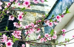 【兴化图片】烟花三月的江南,花稀稀,雨涟涟