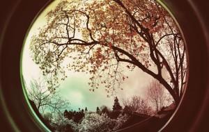 【绵阳图片】站在辛夷树下,与花薄醉,与清香同浴…