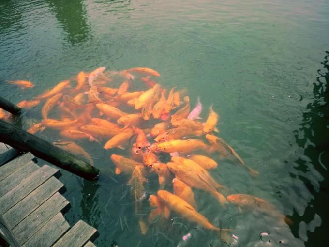 鱼水风景图片动态