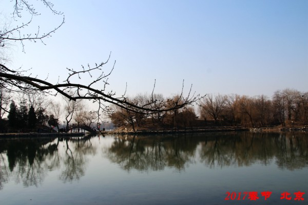 古代竹林动漫风景图
