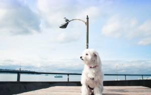 【华盛顿州图片】阿咩 // 旅行日记丨Seattle丨Travel w/ My Dog