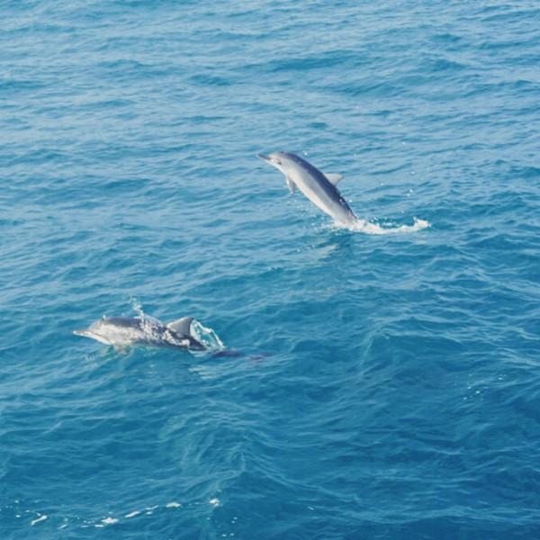 船周围就围满了大大小小的海豚,这可比动物园里演杂技的海豚可爱多了.