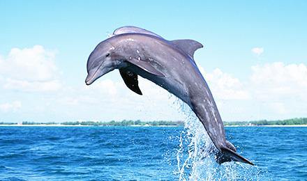 泰国 海豚之旅快艇 苏梅岛一日游 出海看海豚 苏梅岛旅游一日游