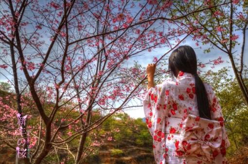 品种最多的樱花观赏风景区