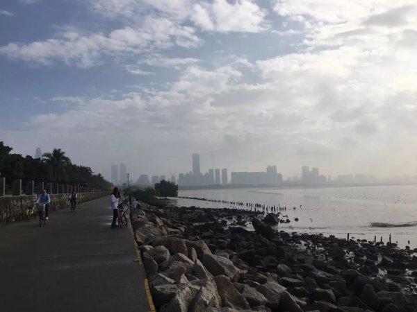 就是早上去深圳湾公园的红树林