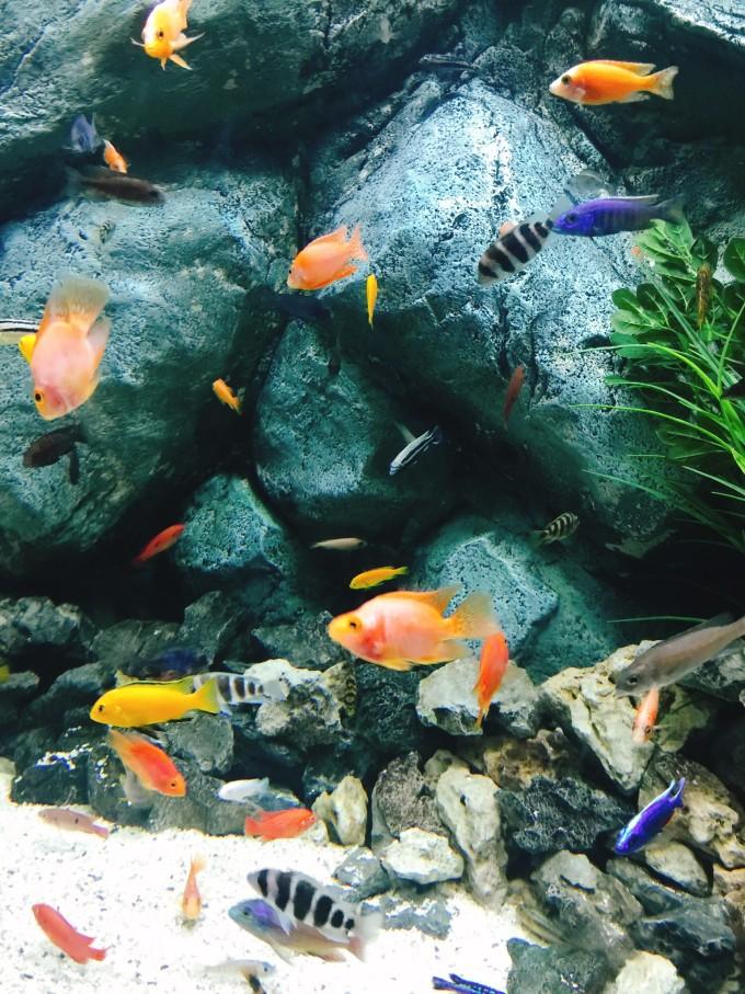 壁纸 动物 海底 海底世界 海洋馆 水族馆 鱼 鱼类 680_907 竖版 竖屏