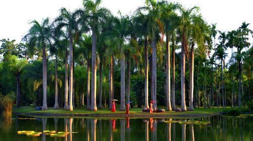 观赏跳舞草,绞杀树,见血封喉树,神秘果树,王棕树等上千种热带植物.