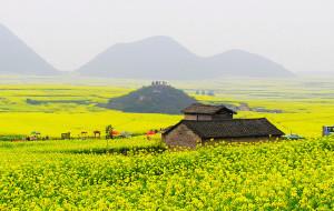 【曲靖图片】一度花黄一度春