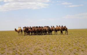 【蒙古图片】20110826 伟大的可汗 . 广袤的蒙古