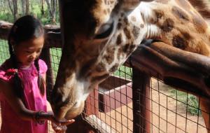 【内罗毕图片】内罗毕,长颈鹿公园