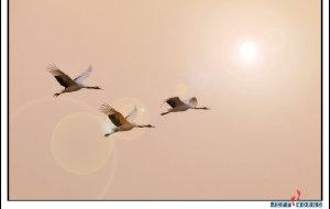 【盐城图片】盐城观鹤