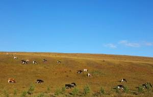 【临江图片】遇见初秋的你一内蒙古呼伦贝尔大草原之旅