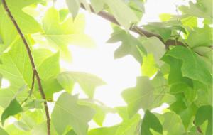 【镇江图片】【2013端午·江南8日5市】应某人要求写的(多图文+详细+一个人暴走)