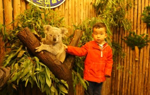 【佛山图片】跟着妈妈去长隆 主题一 (广州长隆野生动物园、欢乐世界)绝对海量图片,带你玩转长隆