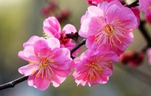【济南图片】2014春自驾皖南赏花之行一  (济南 徐州 南京 宣城 家朋)