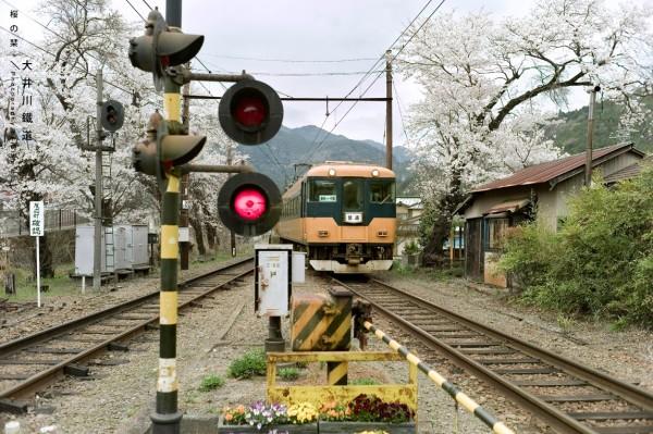 桜花书签 名古屋, 静冈, 富士山的行程纪录