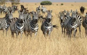 【内罗毕图片】探寻另一个世界--肯尼亚12日动物之旅