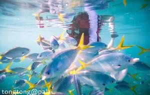 【帕劳图片】帕劳-最美海岛的终极玩法(坐等回复各种问题)