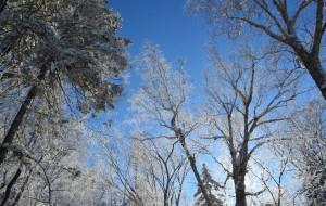 【牡丹江图片】【一个人的版图】(85)——【雪花的奏鸣】(雪谷、雪乡)