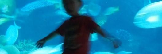 七大海底世界展区,等你发现超越想象的海洋世界 在暹罗海洋世界,你可以看到千奇百怪的海洋生物们,造型浮夸的狮子鱼、张牙舞爪的巨型蜘蛛蟹、海葵丛里炫目的小丑鱼、条纹装的鹦鹉螺、可爱的水獭先生、软萌的水母、威武霸气的鲨鱼……来到这里,它们多姿的风采尽现你的眼前。 暹罗海洋世界(Siam Ocean World)拥有超过3万只的海洋生物,包括企鹅、海豹、水獭、鲨鱼、水蛇、魟、巨型蜘蛛蟹、狮子鱼、叶形海龙等400个品种。 第一展区:奇异世界 奇怪和奇妙的海洋生物,你会发现一些神奇的动物