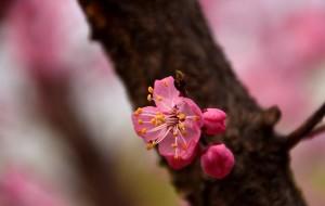 【石家庄图片】#花样游记大赛#春暖花开