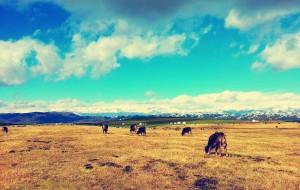 【哈巴河图片】【漫步北疆】金秋的绚烂童话