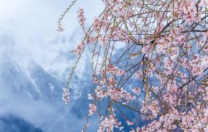 【林芝图片】大美林芝·殷红片片点莓苔