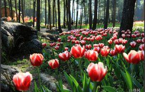 【涪陵图片】#花样游记大赛#美丽花海-大木花谷