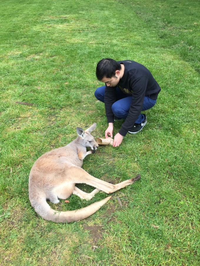 学生自己饲养动物gif