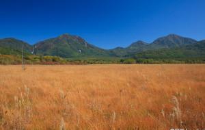 【日光市图片】秋天的奥日光战场原,小田代原, 美丽的草红叶