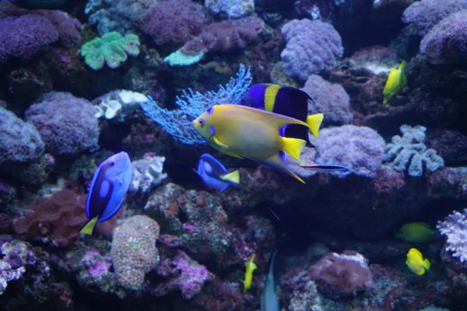 壁纸 海底 海底世界 海洋馆 水族馆 680_454
