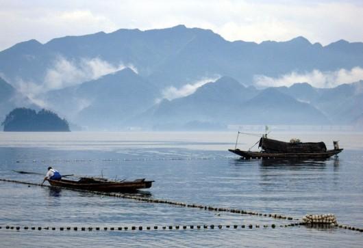 【杭州出发】千岛湖城中湖区+观巨网捕鱼一日游