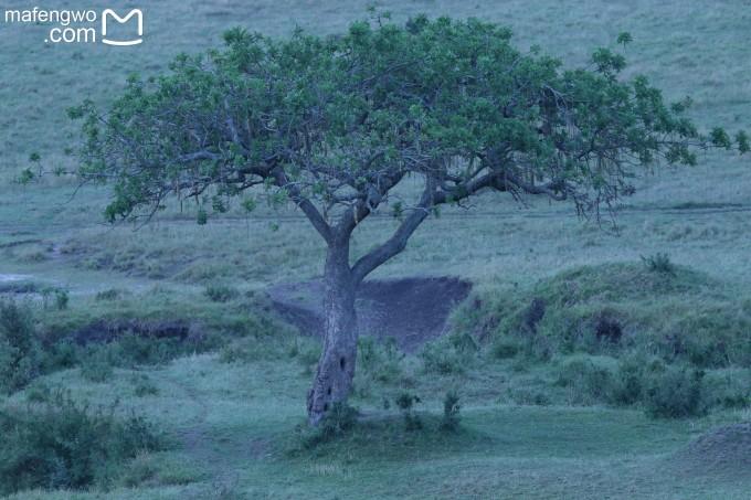 天然野生动物王国——肯尼亚之旅