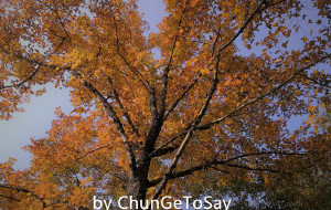 【从江图片】从江│不只是加榜梯田,还有火红的枫叶林和神秘的持枪部落