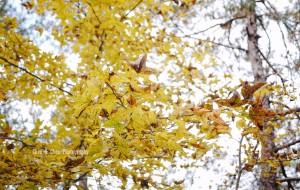 【南黄古道图片】【沪外周边游】南黄古道之秋,第一次非正式徒步之旅
