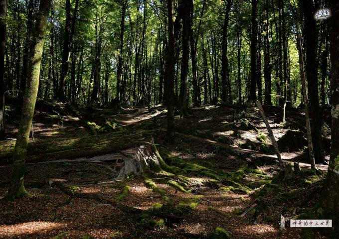 壁纸 风景 森林 桌面 680_480