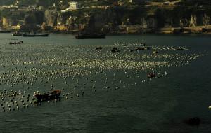 【枸杞岛图片】美丽的枸杞岛——海之恋之六
