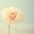 我是一朵小花❃
