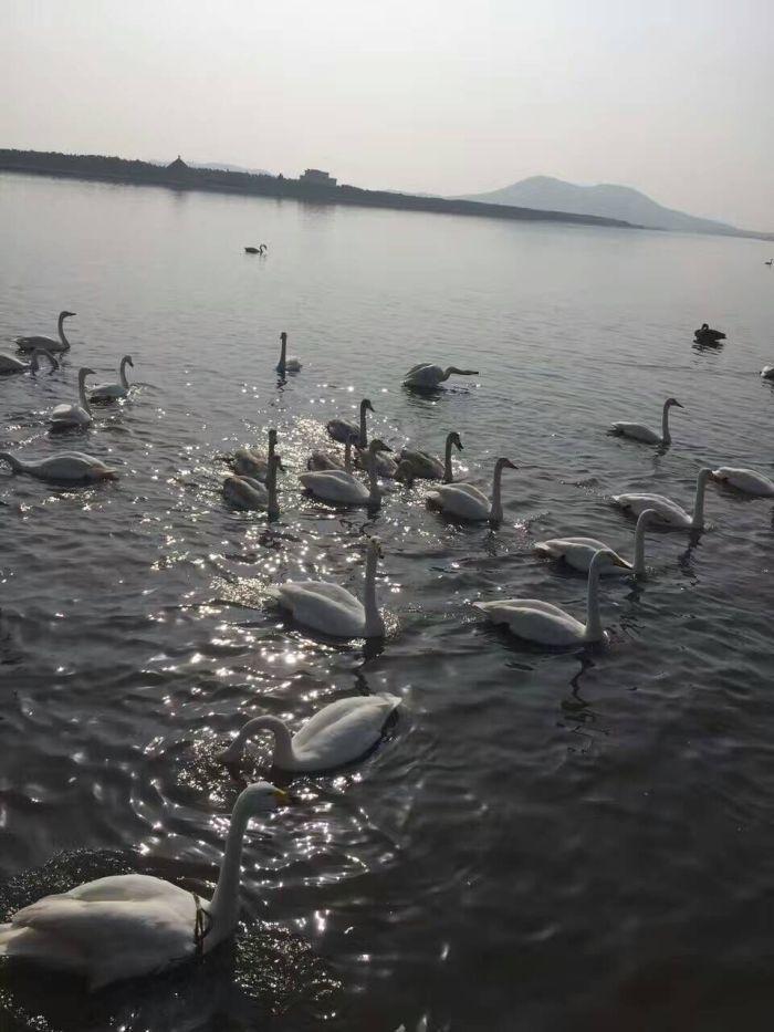 荣成 西霞口动物园, 威海 的刘公岛,环翠楼,幸福门广场,海滨公园