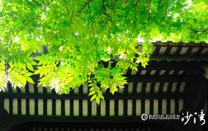 【番禺图片】岭南青石巷 聆听《雨打芭蕉》 --- 广州沙湾古镇 * 秋