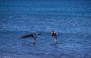 【加拉帕戈斯群岛图片】厄瓜多尔和Galapagos吃喝游(3)- Gapapagos群岛