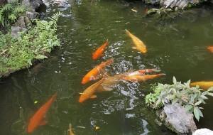【顺德图片】【长辈出游】慢游清晖园之中秋觅食之旅