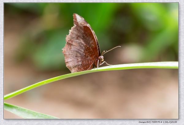放飞蝴蝶,放飞梦想