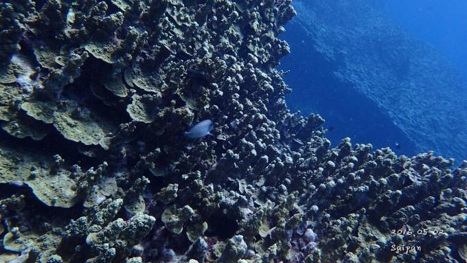 走进北马里亚纳群岛,美国塞班.