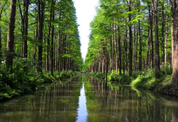 """李中水上森林公园位于兴化市李中镇,是都市人回归自然休闲的好去处。  李中水上森林占地面积1550亩,其中森林面积1050亩,水面面积500亩。园内水系丰富,河道纵横,形成""""河流回环,水杉林立""""的景观。这里是野生动物的天堂,猫头鹰、野鸭、白鹭、黑杜鹃、草鹦鹉、山喜等在此筑巢生息。林中鸟平时有3万多只,多时有6万多只。黄昏时分,百鸟归巢,遮天蔽日,景象蔚为壮观。  参考行程 自驾车: 兴化市区外环线北郊严家口→兴沙公路李中水上森林公园。 公共交通:(农公站坐车) (1)兴化-"""