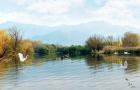 14天超长有效期 杭州西溪湿地东区/西区门票+电瓶游船票 大门票等联票(当天免预约 2小时后入园)