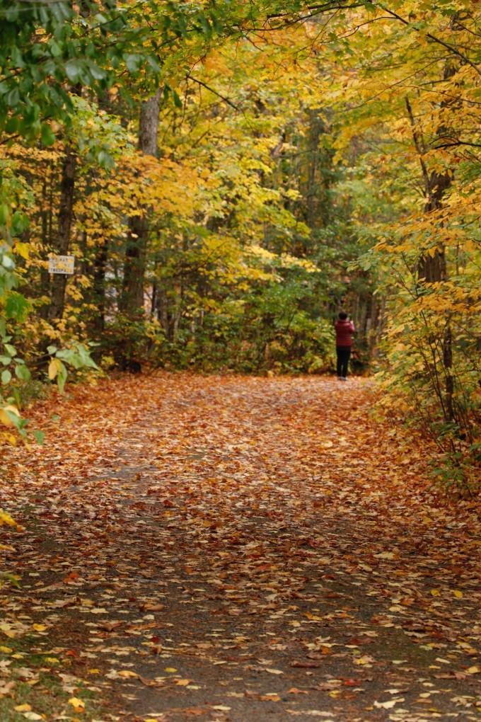 只有几棵枫树红了,地上有大片的落叶, 有些人在这里拍照.